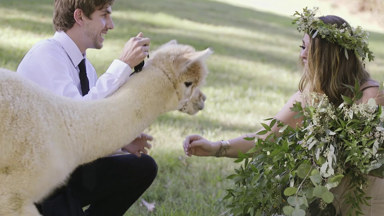 BEST PROPOSAL EVER - A Surprise Proposal with an ALPACA!!